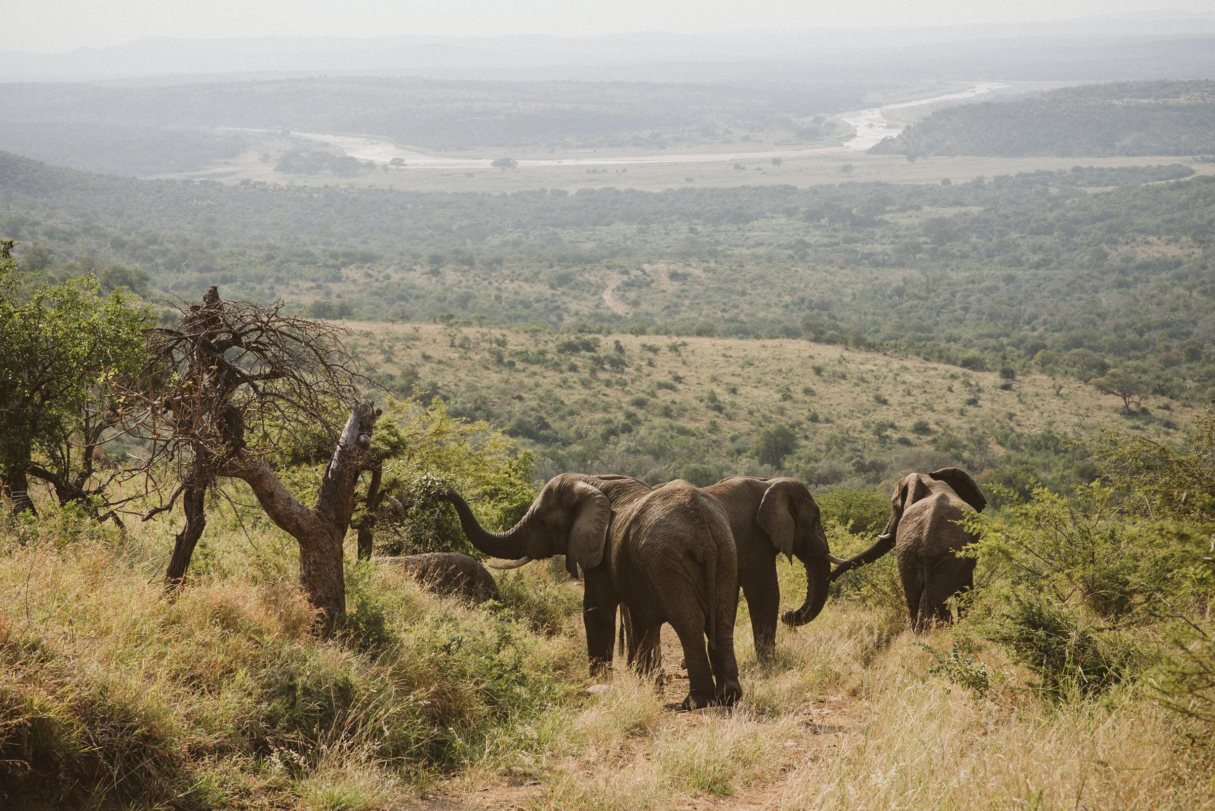 mFulaWozi Wilderness